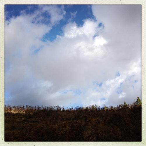 sky over weeds