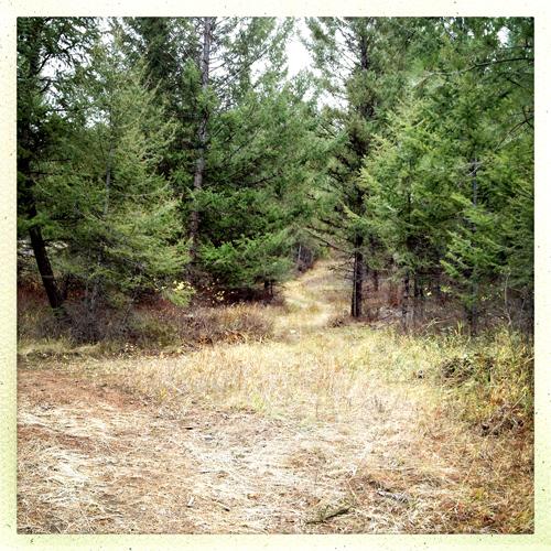 skid trail