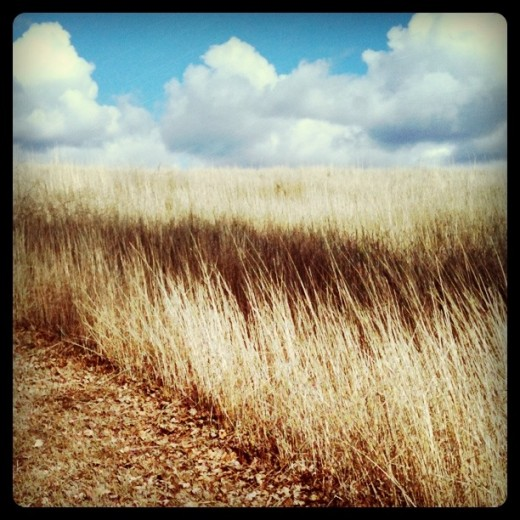 Dry grass and white clouds