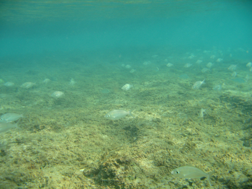 school of fish in the Caribbean USVI
